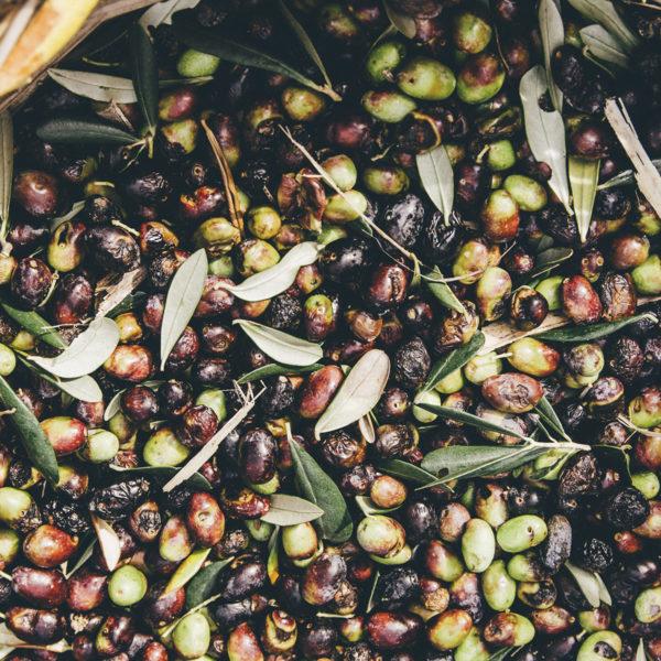 olive_cesto