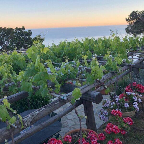 ecofarm tramonto a Portofino in fiore