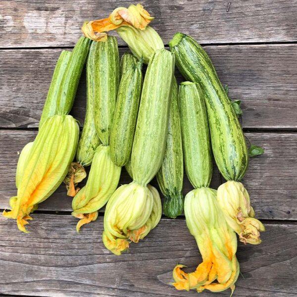 zucchine di Portofino kilometro zero sul monte di Portofino
