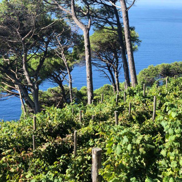 degustazioni di vino azienda locale di Portofino
