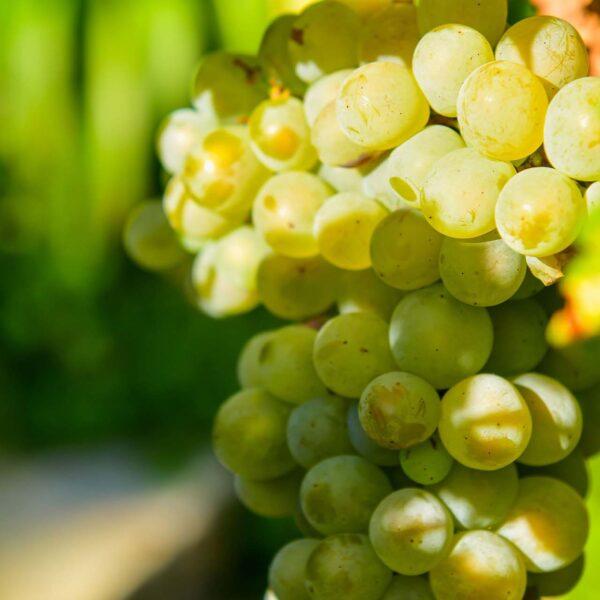 degustazioni di vino locale a Portofino parco