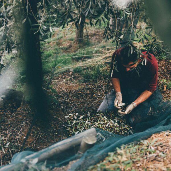 frantoio a freddo deriva da un vecchio essicatorio olio extravergine di oliva