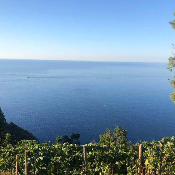 il vino di Portofino e del Tigullio nel monte di Portofino