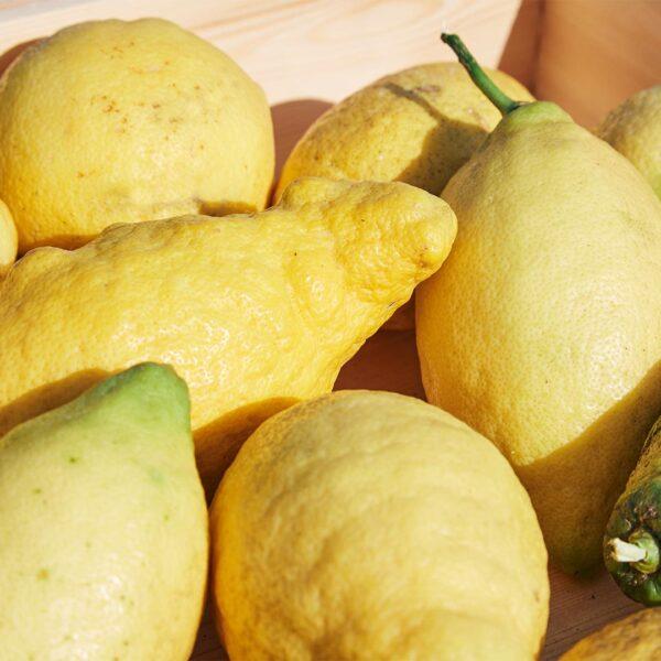 limoni freschi di Portofino la marmellata del monte